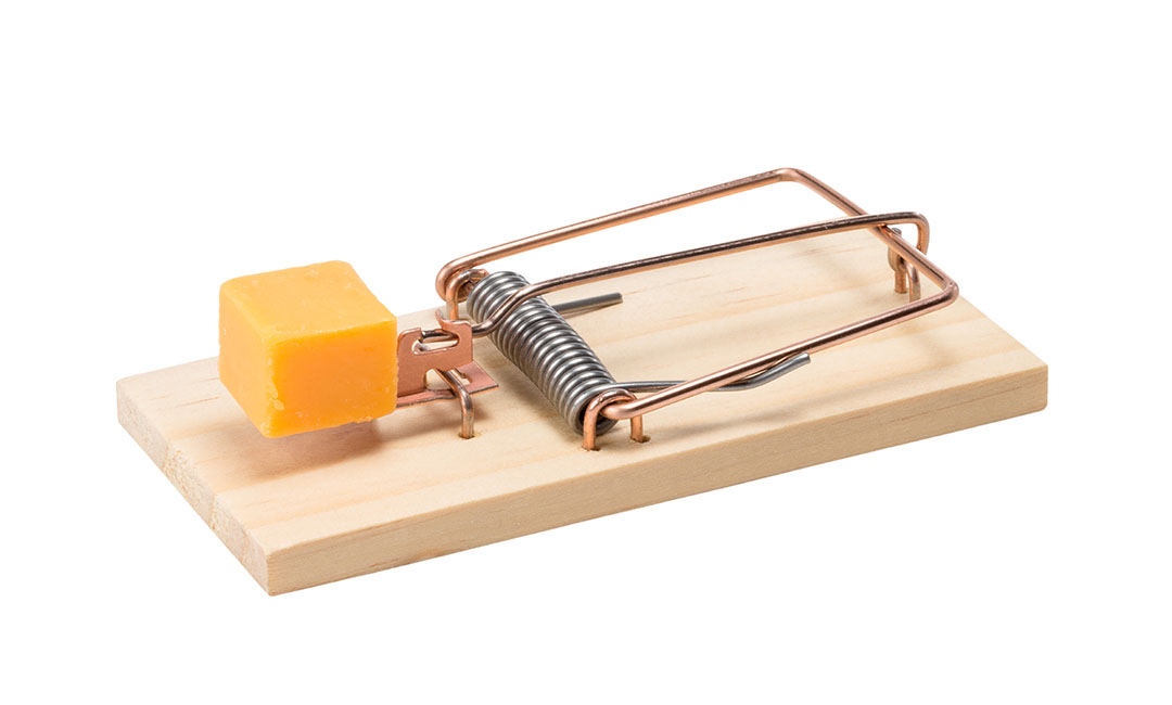 Mousetrap Related Keywords Mousetrap Long Tail Keywords